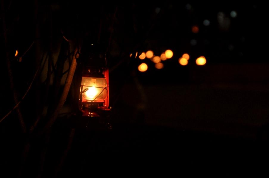 Lampiony na drzewach