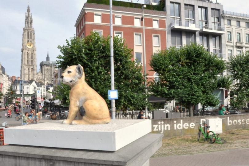 Dzikie zwierzeta w Centrum Antwerpii