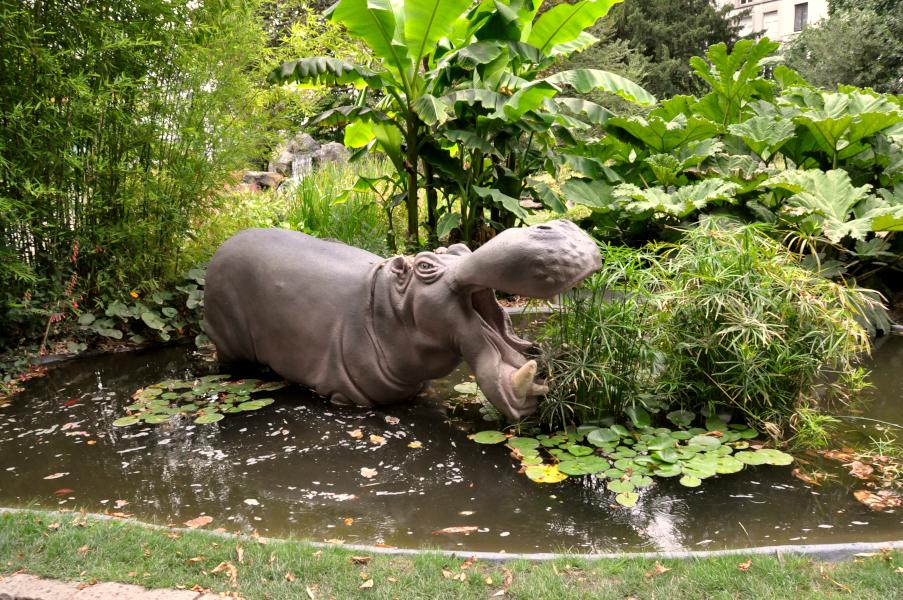 Hipopotam w Ogrodzie Botanicznym w Antwerpii