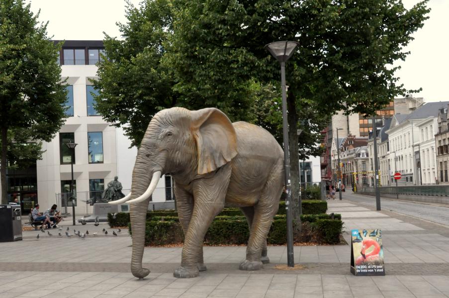 Slon w Antwerpii