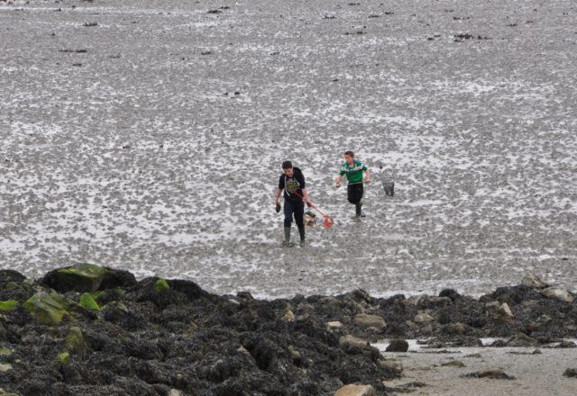 Poławiacze małży w Yerseke